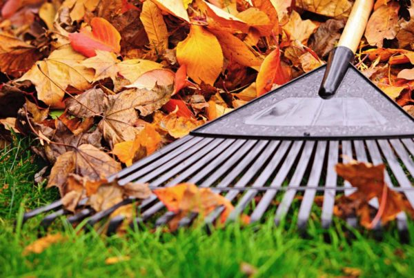 Fall-Fertilizer-Guide-by-Sunstate-Companies