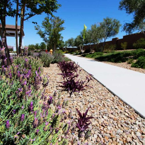 Heritage - Landscape Project by Sunstate Companies of Las Vegas